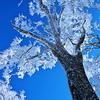 WILD LIFE #5 雪の大山登山「JOB」