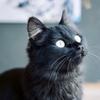 【猫の楽園】田代島を撮影:中編