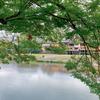 京都で見かけたチャップマンスティック奏者@satoru.sf@動画あり