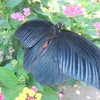 写真「蝶」