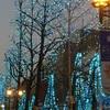 「都道府県の木」ご存知ですか? 大阪はイチョウの木。