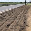 秋冬野菜専用エリアに肥料を散布しました