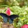 *[長崎日記]蜂や蝶、鳥、小動物で賑わう夏の庭