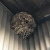 田原市で納屋の軒下に作られたスズメバチの巣を駆除してきました!