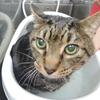 猫の慢性腎不全のステージ