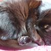 今日の黒猫モモ&白黒猫ナナの動画ー749