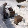 雪の中、箱を開けたら蜂が出た