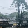 台風の #みかどパン と #ヒマラヤ杉