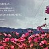 第54歩 お花畑でDANCE HALL
