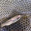 イシグロ沼津店 もっち&まのっち 管釣り釣行 IN 裾野フィッシングパーク