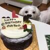 シュクレペールのお誕生日ケーキ!