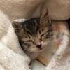 野良猫の赤ちゃん保護中…