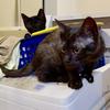 猫が洗濯機の機械部に侵入するのを防止する板
