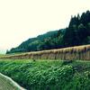 GIMP用プラグインスクリプト「Cross processing effect...」で、田園風景の写真の緑をレトロっぽく強調。