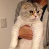 ラブリーチャーミーな猫
