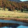 昔の一枚・高峰、池の平湿原