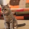 Rinenna(リネンナ)の撮影される猫スタッフちゃんをエントリーなう!!