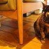 初めての台南・高雄 @台湾旅行 6回目 2018.9 7日目 放鬆意識 Massage N' Cafeで猫三昧