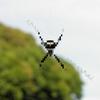 益虫はハンターだが狙われる側でもある。凛とした蜘蛛エックス