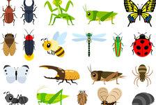 【昆虫食】ゲテモノと呼ばないで!食糧問題から考える、昆虫食の可能性とは?