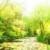 【香川県の直島に1泊2日ひとり旅・8】地中美術館に入る前にモネの池