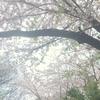 桜の精霊とのお話