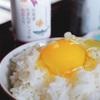 北海道お取り寄せ【8】厚真町 小林農園『平飼い有精卵』|復興を遂げた平飼い卵