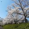 ☆桜さくらサクラ☆