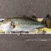 釣れるときは釣れる