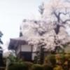 お寺の桜(1990年代)