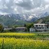 5月の白馬村を散歩、いい季節。