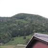【d:matchaのこと】和束町にてお茶の無農薬・有機栽培の挑戦開始!