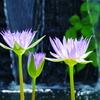 目覚めの花 | LEICA MACRO 45mm