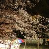 #14 夜桜
