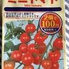 季節外れのミニトマト〜水耕栽培🍅①