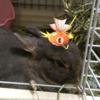 (●゚◇゚●)【ポケモンGO】八景島シーパラダイスには、レアなポケモンや巣がいっぱいあった!