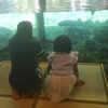 桃狩りと山梨県立富士湧水の里水族館「森の中の水族館」に行ってきました!!