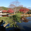 群馬・桜山公園を歩く ~冬桜と紅葉を同時に楽しむ~