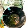 金魚水槽の水換え