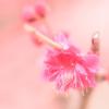 【写真】神戸 岡本公園に梅を見に行ってきた!