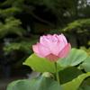 東福寺塔頭 勝林寺さまで盛り盛りの花手水を愛でるなど@2021