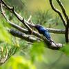鳥撮りカメラはオリンパスからソニーへ