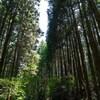 林道散歩でアントニン・レーモンド建築を思い出す