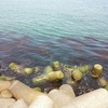 今年の海はどんな感じ? エルニーニョ現象と釣りへの影響について