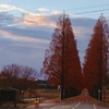 メタセコイアの向こうに/Beyond the trees of Metasequoia · Ayako Toyooka