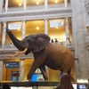 スミソニアン国立自然史博物館 骨、ミイラ、剥製、世界最大のブルーダイヤ、大人も子供も楽しめる博物館
