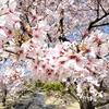 京都参拝(八坂神社・大谷祖廟・円山公園)②観光119...20210401京都
