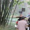 3,12、(土・雨)竹林公園を散歩後、帰国。
