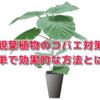観葉植物のコバエ対策、殺虫剤を使わずに完全駆除する方法