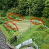 困ったなぁ、イノシシが連日進入、山村の畑  ★アライグマかも